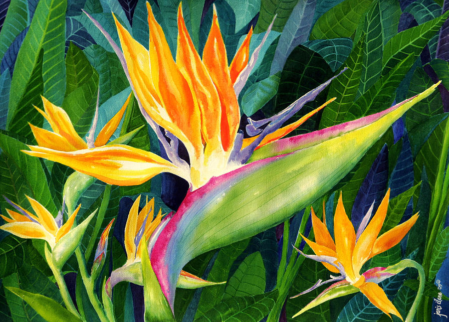 Bird-of-paradise Painting  - Bird-of-paradise Fine Art Print