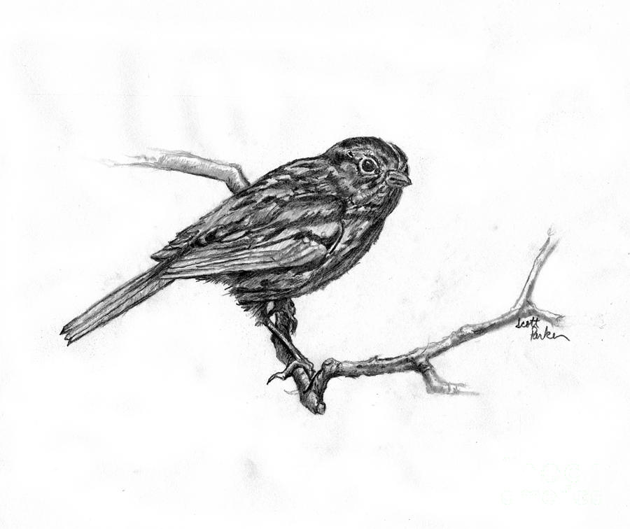 Bird On A Branch Drawing  - Bird On A Branch Fine Art Print