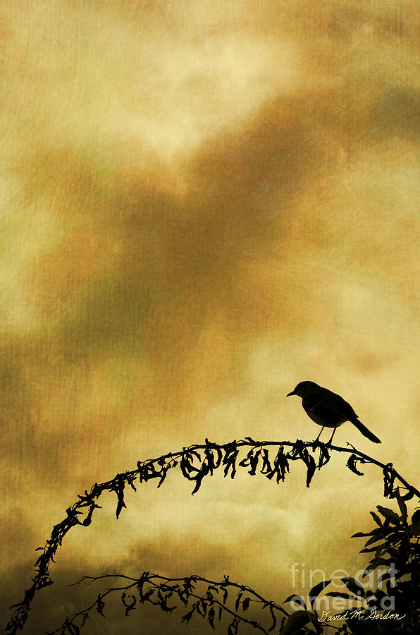 Bird On Branch Montage Photograph