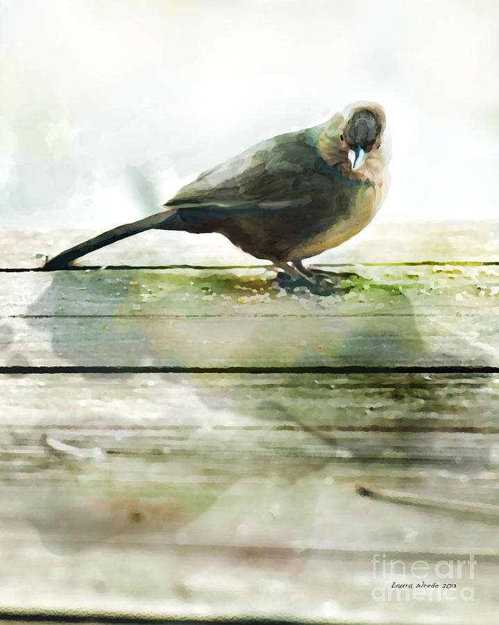 Bird Images Painting - Bird On The Deck by Artist and Photographer Laura Wrede