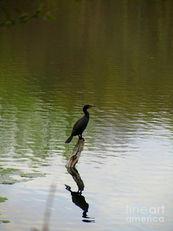 Bird On The Lake Photograph