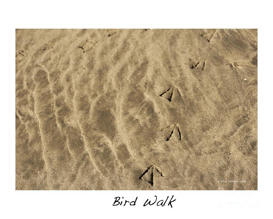 Bird Feet Photograph - Bird Walk by Artist and Photographer Laura Wrede