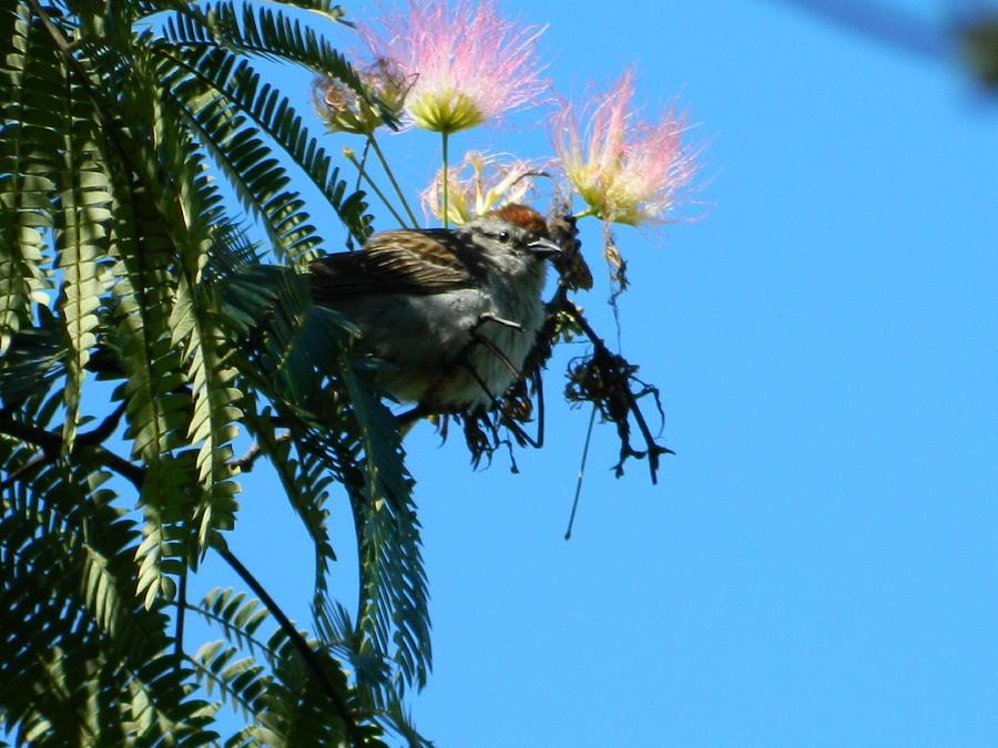 Bird Photograph - Bird Watching by Linda Brown