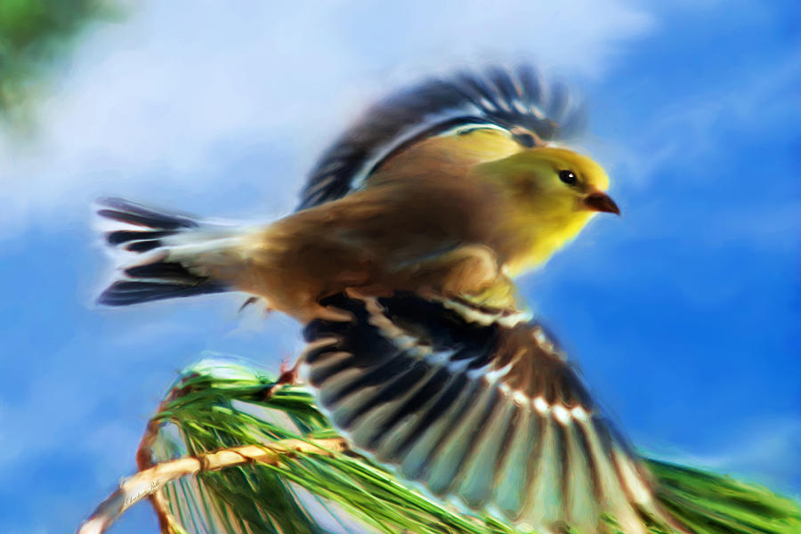 Bird Wings Of Song Painting