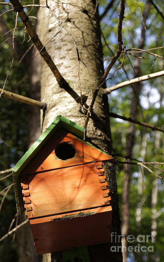 Birdhouse By Line Gagne Photograph  - Birdhouse By Line Gagne Fine Art Print