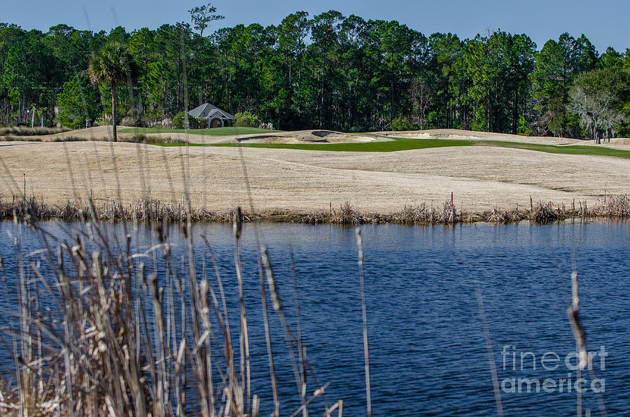 Cattail Pond Photograph