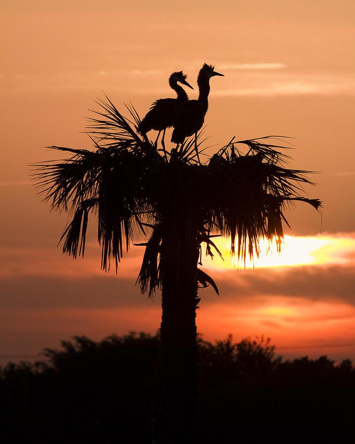 Birds At Sunrise On Florida Palm Tree Photograph