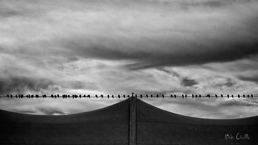 Animal Photograph - Birds by Bob Orsillo