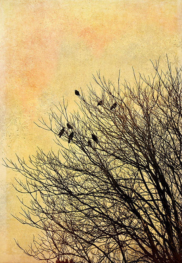 Birds Photograph  - Birds Fine Art Print