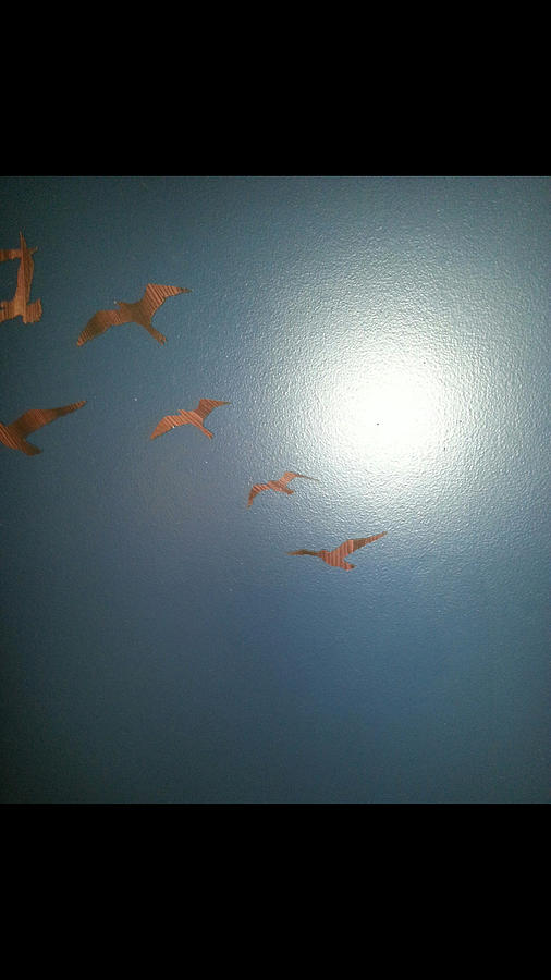 Birds Of Flight Photograph
