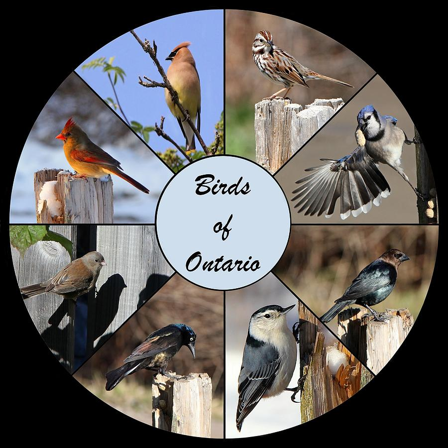 Birds Of Ontario Photograph