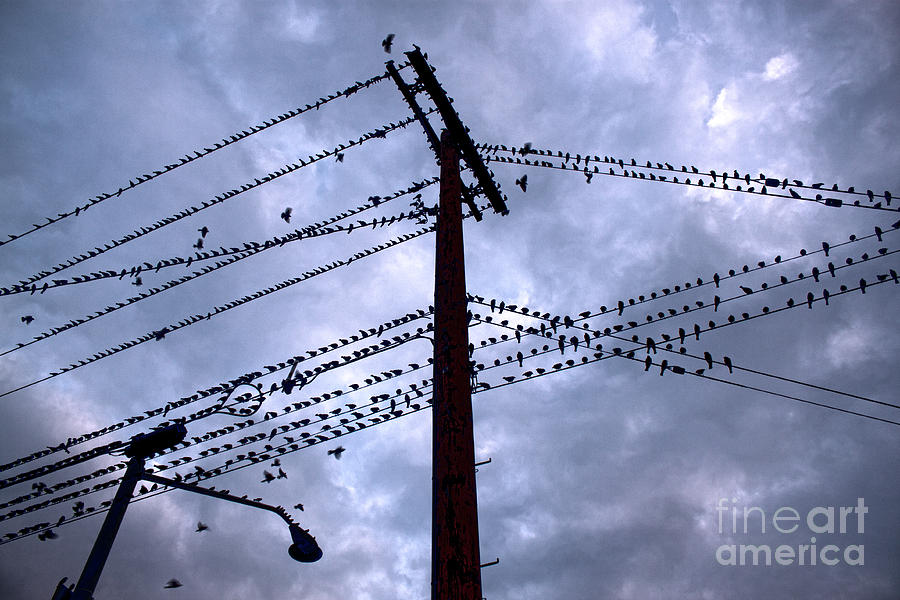 Birds On A Wire In Blue Photograph  - Birds On A Wire In Blue Fine Art Print