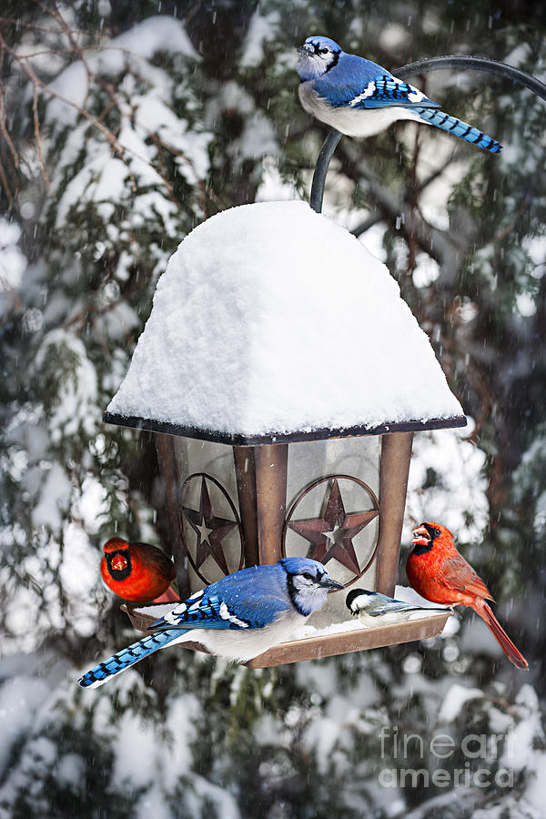 Birds On Bird Feeder In Winter Photograph
