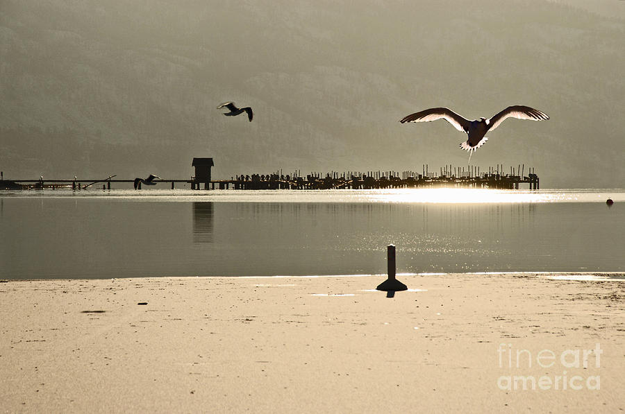 Birds On Thine Ice Photograph  - Birds On Thine Ice Fine Art Print