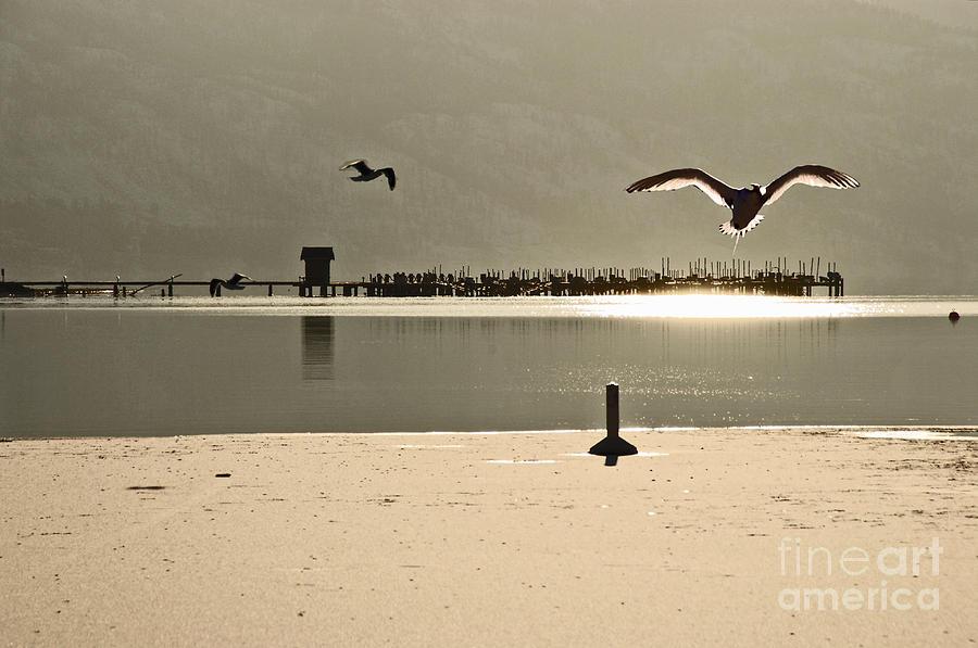 Birds On Thine Ice Photograph