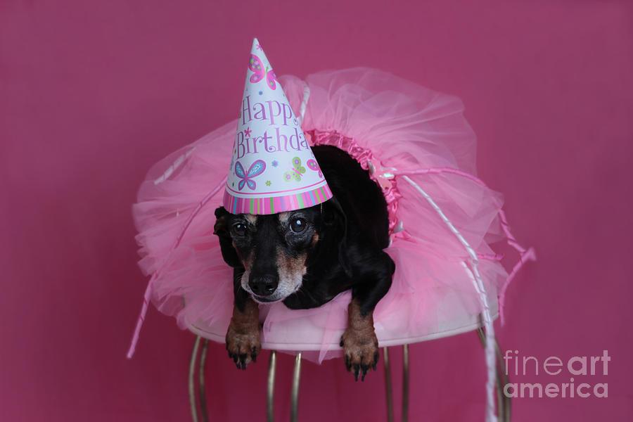 Birthday Surprise Photograph