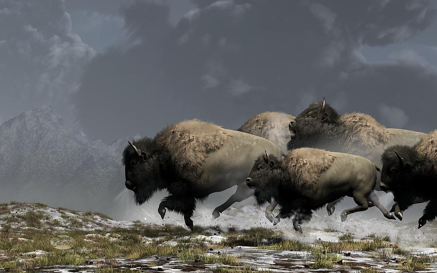 Bison Stampede Digital Art