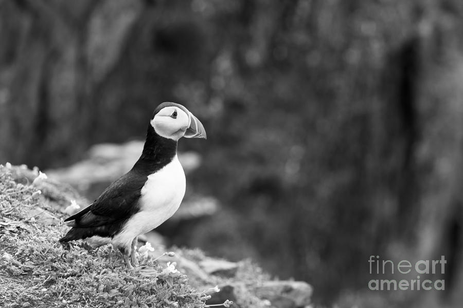 Adult Photograph - Black And White Black And White Bird by Anne Gilbert