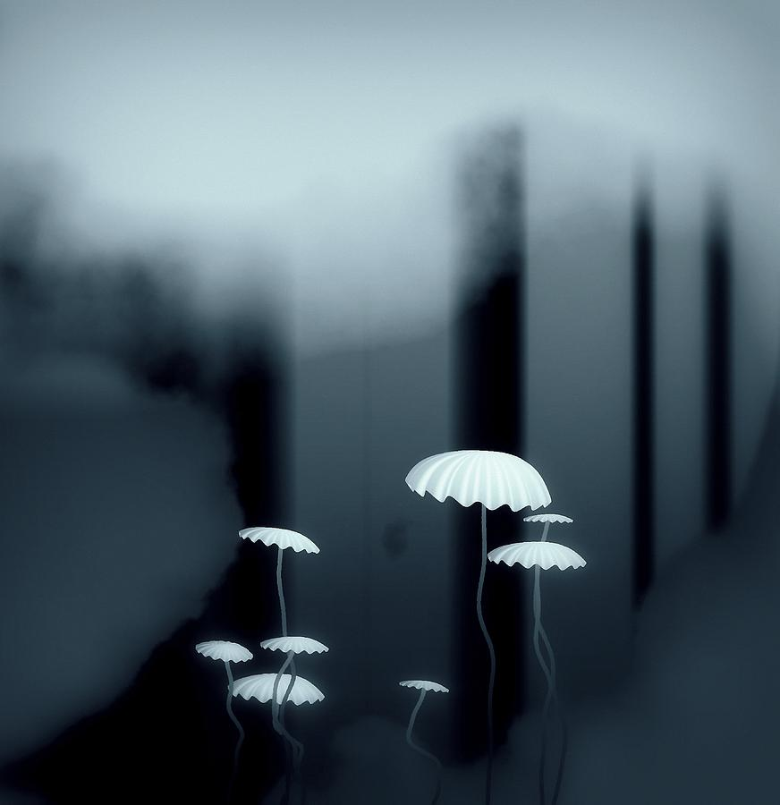 Black And White Mushrooms Digital Art