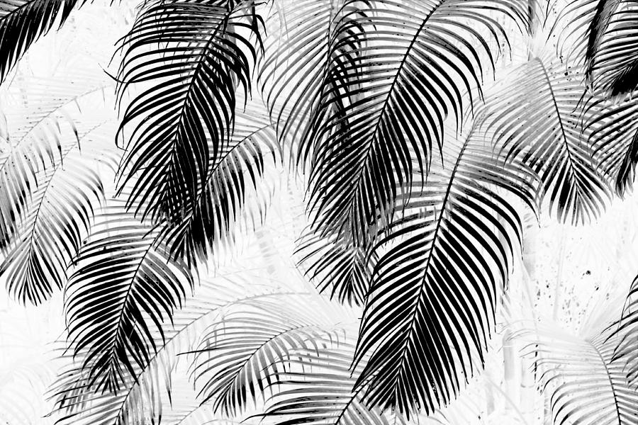 Black And White Palm Fronds Digital Art  - Black And White Palm Fronds Fine Art Print