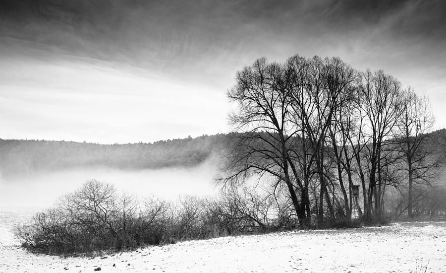 Black And White Winter Landscape With Trees Photograph