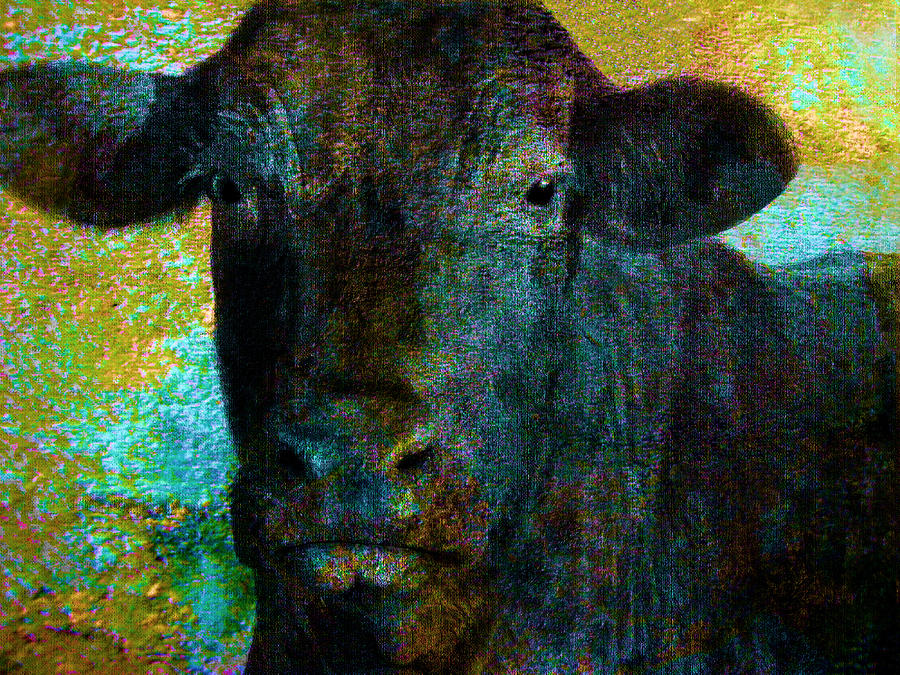 Black Angus Mixed Media  - Black Angus Fine Art Print