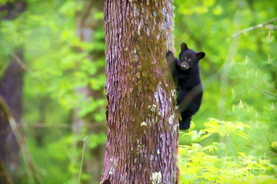 Pixel Paintography Photograph - Black Bear Cub In Tree by Dan Friend