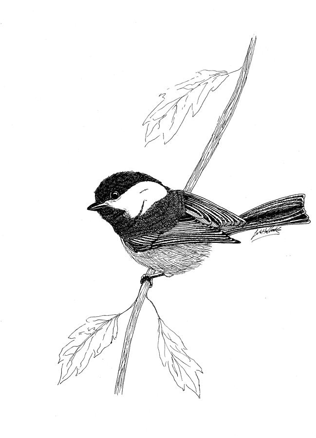 Black Capped Chick-a-dee Drawing