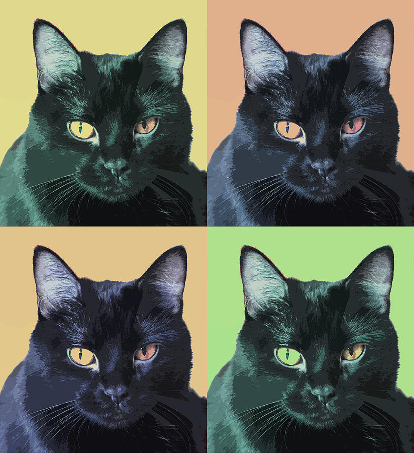 Black Cat Pop  Art Photograph
