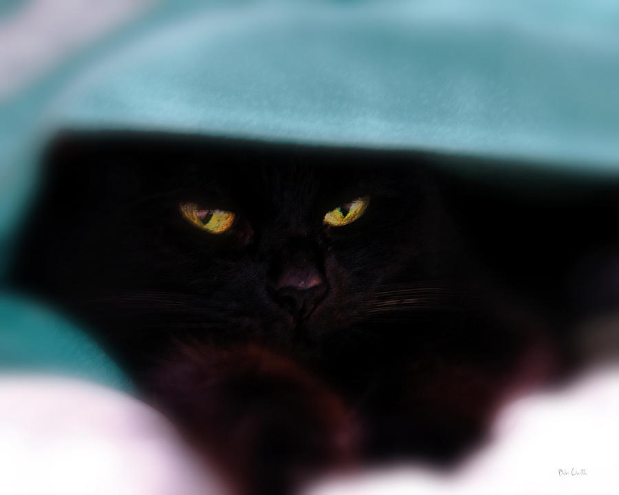Cat Photograph - Black Cat Secrets by Bob Orsillo