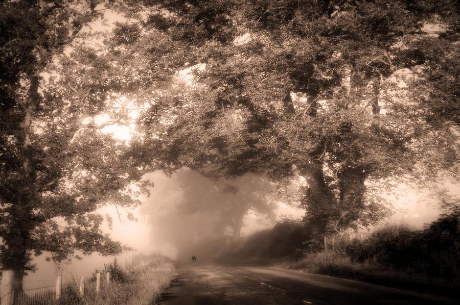 Scotland Photograph - Black Dog On A Misty Road. Misty Roads Of Scotland by Jenny Rainbow