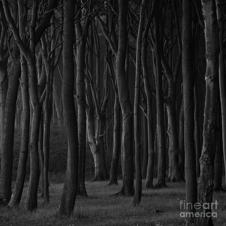 Black Forest Photograph  - Black Forest Fine Art Print