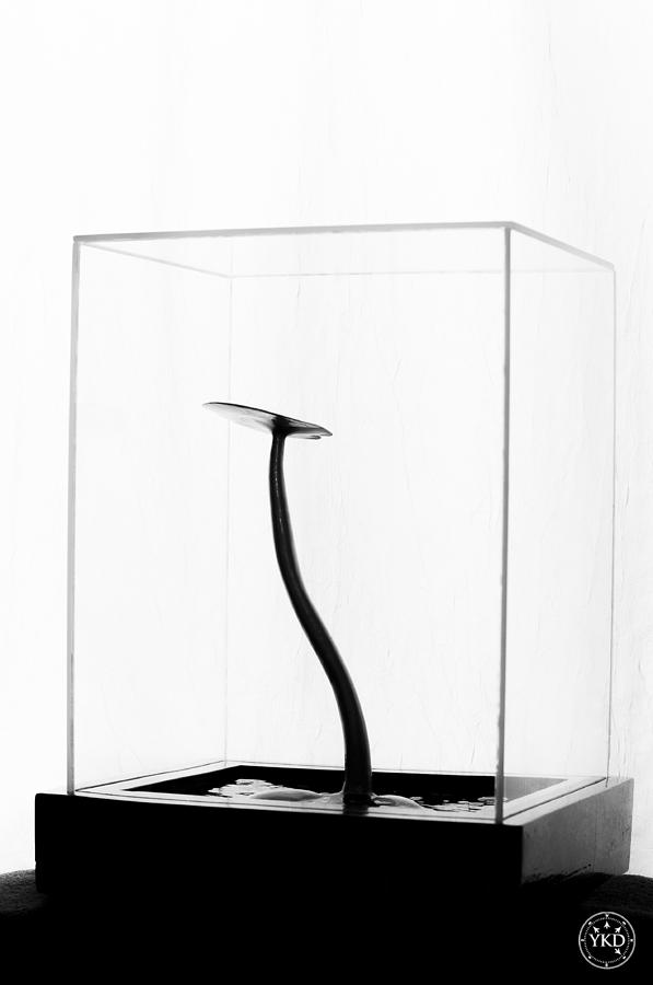 Black Gold Lily In Black And White Sculpture