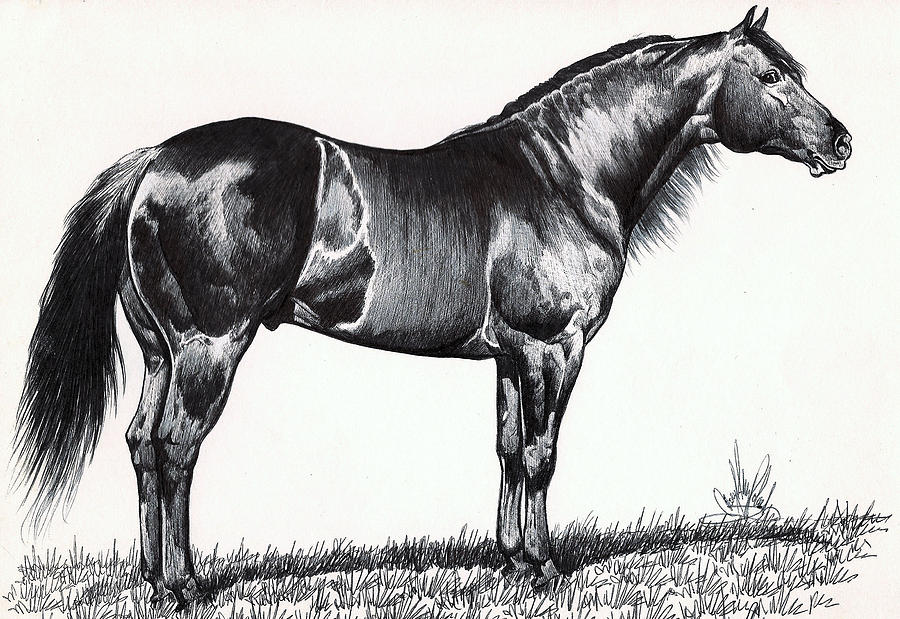 Black horse head drawing - photo#27