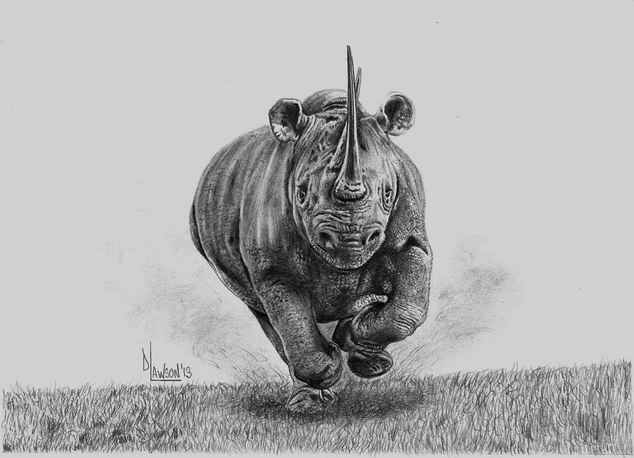 Line Drawing Rhino : African rhinoceros drawing
