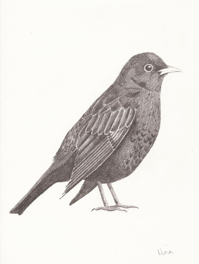 blackbirds drawing - photo #10