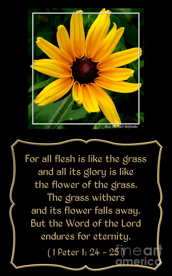 Blackeyed Susan With Bible Quote From 1 Peter Photograph