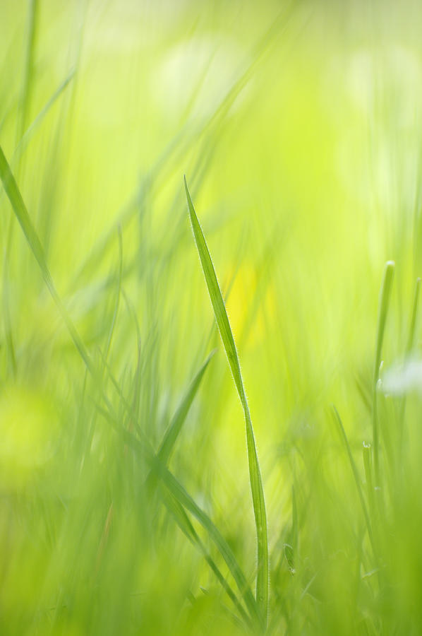 Blades Of Grass - Green Spring Meadow - Abstract Soft Blurred Photograph