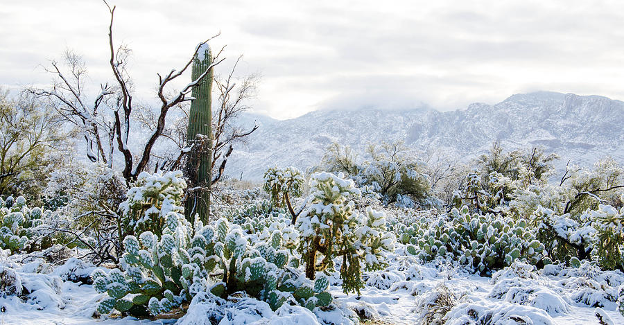 blanket-of-snow-in-the-sonoran-desert-mi