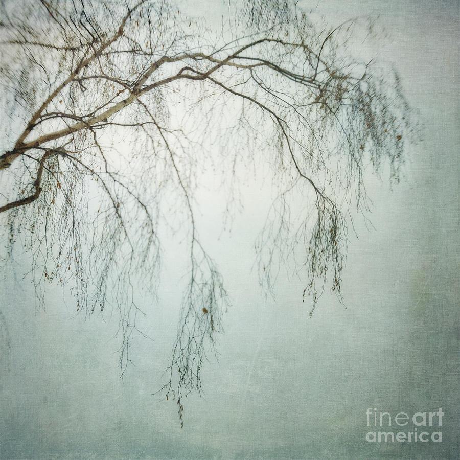 bleakly III Photograph