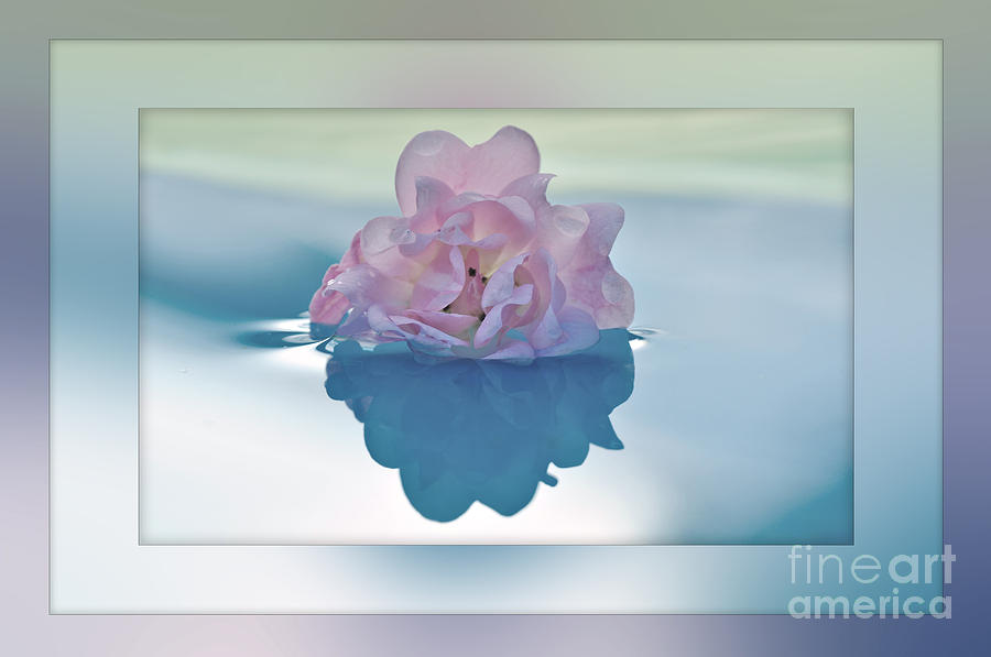 Photography Photograph - Blend Of Pastels by Kaye Menner