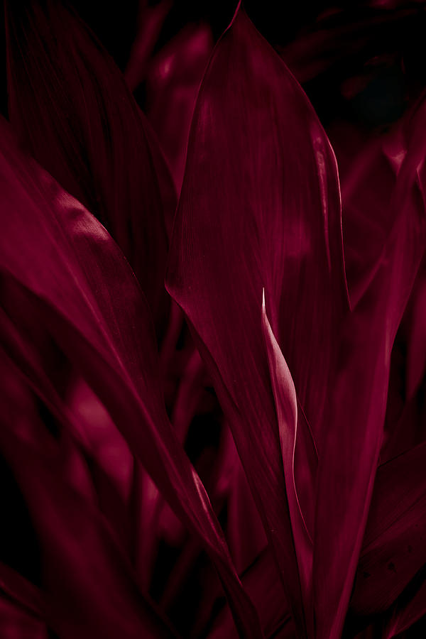Blood Red Photograph  - Blood Red Fine Art Print