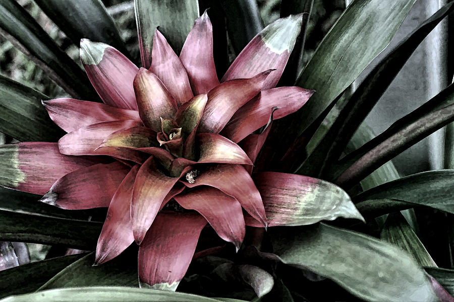 Bloom Photograph  - Bloom Fine Art Print