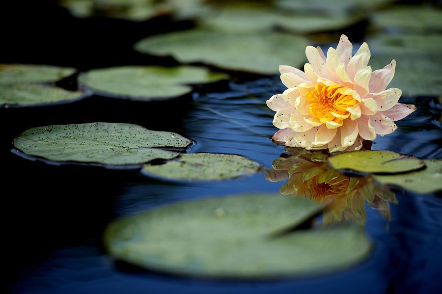 Photograph - Blossom 2 by Joey  Maganini