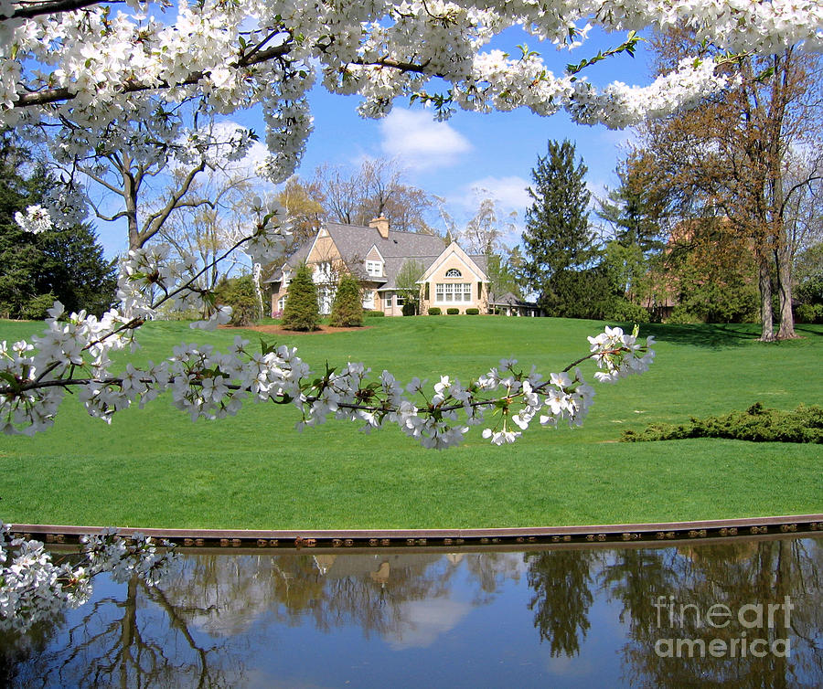 Blossom-framed House Photograph