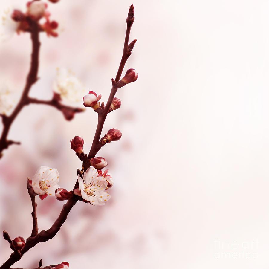 Blossom Photograph - Blossom by Jelena Jovanovic