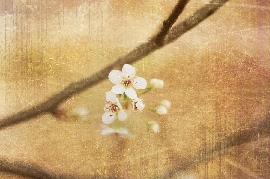 Blossom Photograph