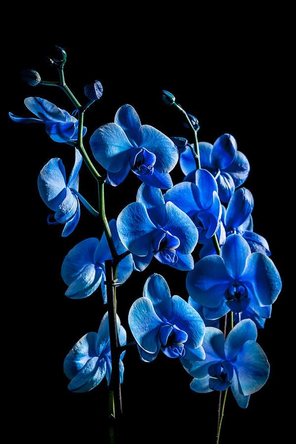 Beautiful Photograph - Blue Beauty by Erik Brede