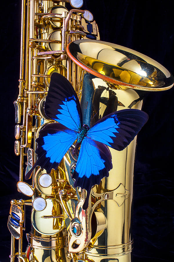 Blue Butterfly On Sax Photograph  - Blue Butterfly On Sax Fine Art Print