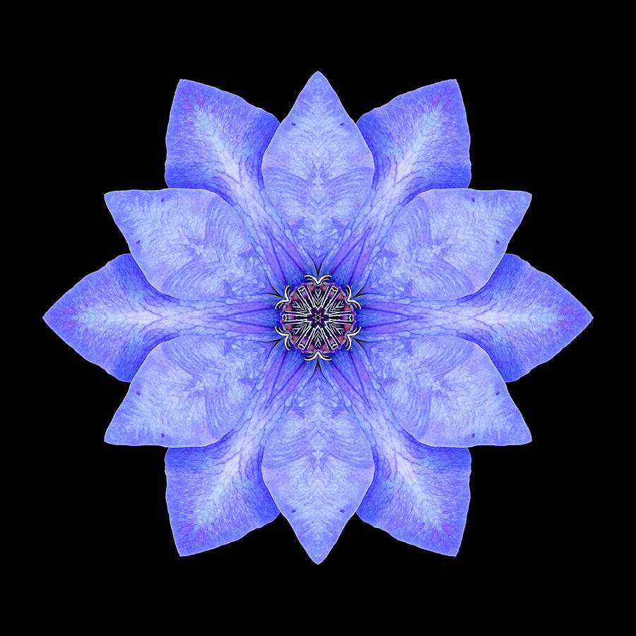 Flower Photograph - Blue Clematis Flower Mandala by David J Bookbinder
